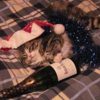 В предвкушении Нового года. :: Маера Урусова