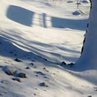 Тени на снегу :: Валерий Талашов