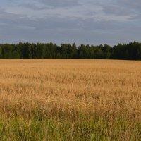 Леса,поля... :: Вера Андреева