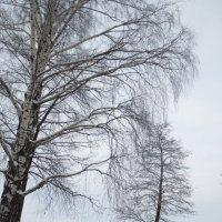 зима рисует :: Елена