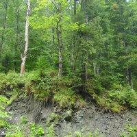 Горный  обвал  в  Карпатском  лесу :: Андрей  Васильевич Коляскин