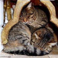 Это любовь)) :: Zima Zima