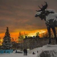 В ожидании солнца :: Игорь Чубаров
