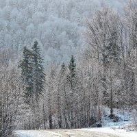 Декабрь :: Нина Сигаева