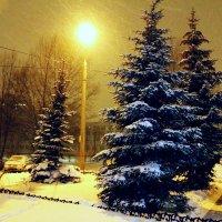 В Новогоднюю ночь ... :: Damir Si