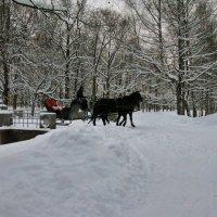 Прогулка по зимнему парку. :: ТАТЬЯНА (tatik)