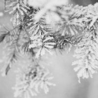 Мороз :: Сергей Потлов