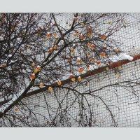новогодняя яблонька :: sv.kaschuk