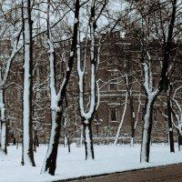 Свежий снег :: Цветков Виктор Васильевич