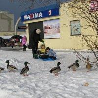 Зимний город :: Владислав