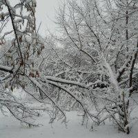 Ах, снег-снежок, белая метелица... :: Галина Медведева