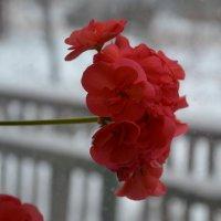 за окном зима :: Наталья Цешковская