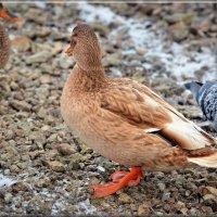 зимние соседи :: linnud