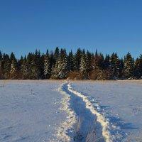 Зимняя прогулка :: Вера Андреева