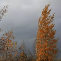Под  небом  серым... :: Валерия  Полещикова