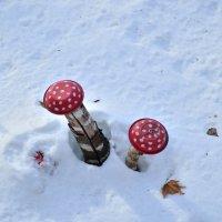 Грибы под снегом :: Владимир KVN