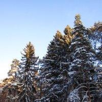 Зимний день :: Андрей Снегерёв