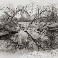 И в воде растут деревья (ЧБ) :: Vladimir