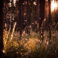Маленькие лесные эльфы... :: Клиентова Алиса