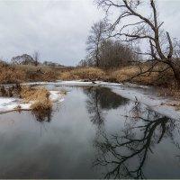 На золотистых болотах :: Vladimir