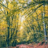 дорога в осень :: Sergey Bagach