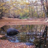 Тихая речка листвою засыпана... :: Леонид Корейба