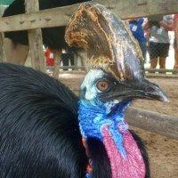 Птица казуар. :: Чария Зоя