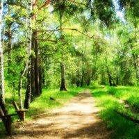 Скамейка в лесу :: Натали Акшинцева