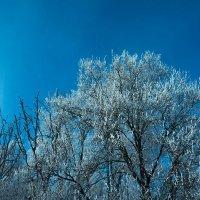 ледяные звёздочки :: Галина Петрова