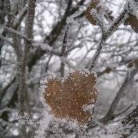 Первый мороз :: Алена WeRa