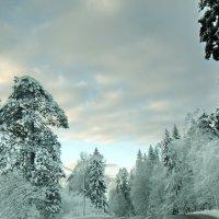 зимушка -зима :: Ольга Cоломатина