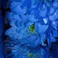 passion flower :: Татьяна Кретова
