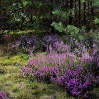 Грибной  лес. :: Валера39 Василевский.