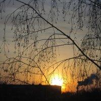 Вечернее солнышко . :: Мила Бовкун