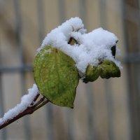 Европейская зима :: Tatiana Zabotina