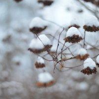 творчество зимы))) :: N. Efimkina