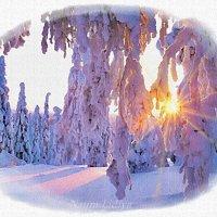 Иней в лесу :: Лидия (naum.lidiya)