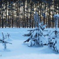 Сибирь. Зима :: Татьяна Аистова