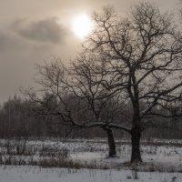 Холодное солнце зимы.... :: Андрей Зайцев