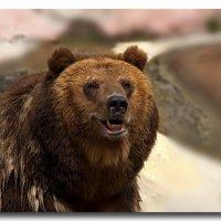 Медвед :: GaL-Lina .