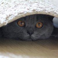 здесь он меня точно не найдет...тсссс... :: Александра Евдокимова