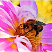 пчелка :: Ольга Степанова