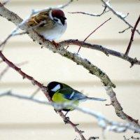 птицы :: Татьяна