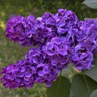 Пусть в душе цветёт весна!) :: Барбара
