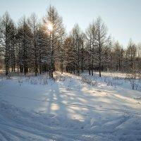 зимнее утро :: Андрей ЕВСЕЕВ