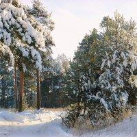 В зимнем лесу. :: Павлова Татьяна Павлова