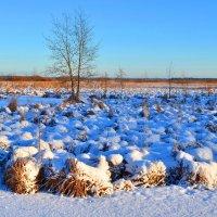 Пришли морозы :: Николай Танаев