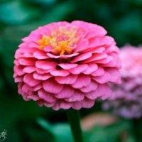 цветок :: Алена Бестик