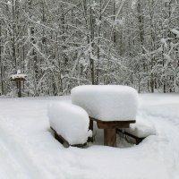 Лесной осадкомер :: Иля Григорьева