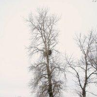 Гнездо белохвостого орлана :: Viktor Eremenko